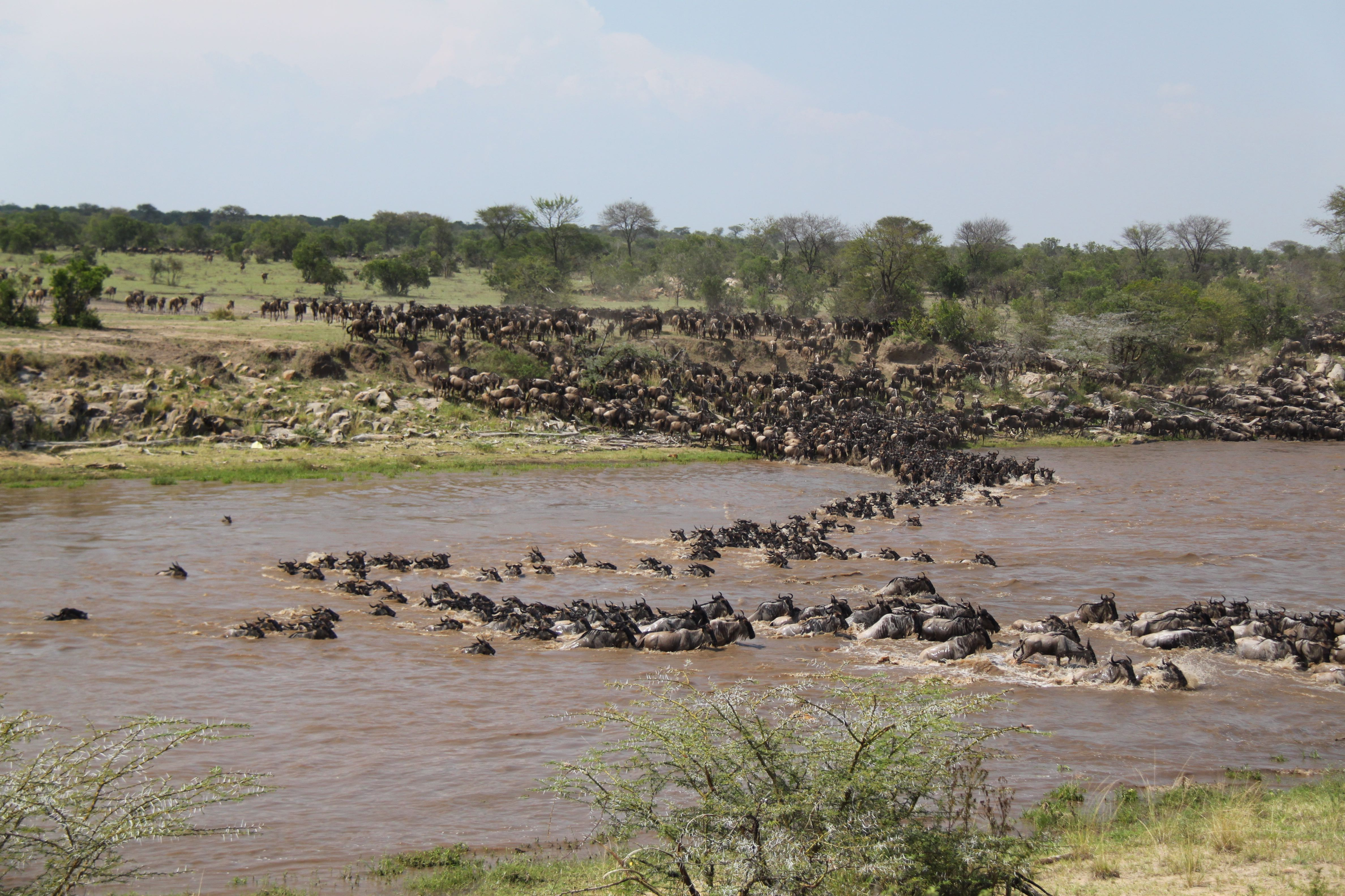 Kampeersafari Grote Trek Tanzania