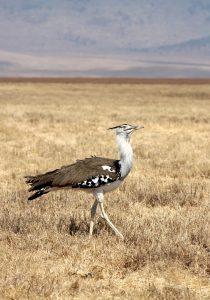 Een safari waarbij vogelliefhebbers hun hart kunnen ophalen!