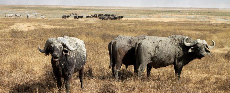 Family safari Tanzania Highlights