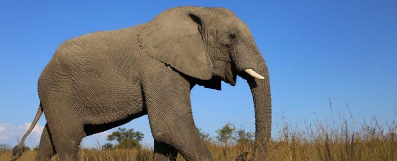 voorbeeld safari's