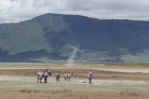 Zebras Ngorongoro National Park Tanzania