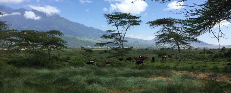 Camping Safari Tanzania Budget Momella lake area