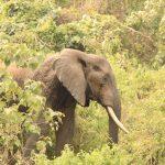 Experience Family Safari Tanzania