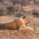 Amazing safari in Tanzania!