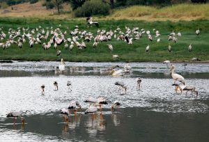 Diversity of birdlife in Lake Manyara National Park Tanzania