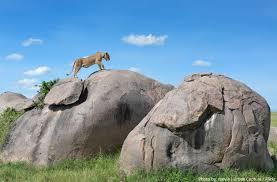 The Simba Kopjes in Serengeti National Park Tanzania